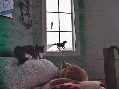 cats-bird-low