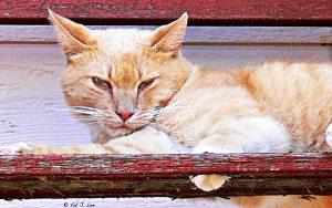 Alfredo the Cat
