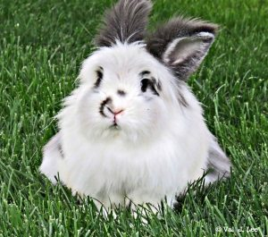 As Cute as a Bunny— Sweet Thing's True Stories